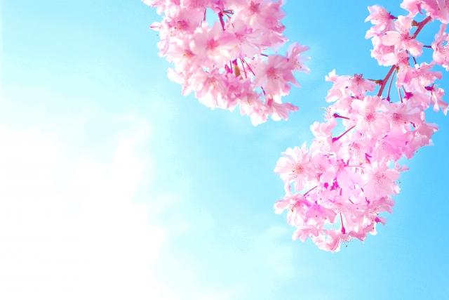 満開の桜 合格のイメージ