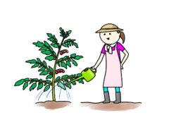 植物に水やりする母親