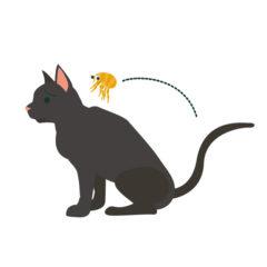猫の背中でジャンプするノミ