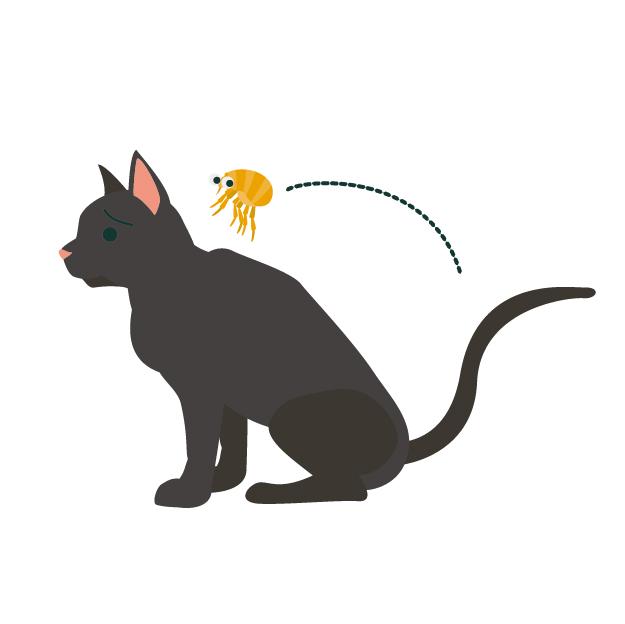 猫の背中の蚤