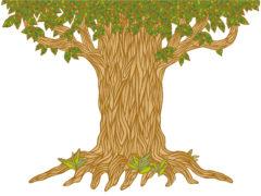 幹が太い樹木