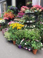 花屋の店先