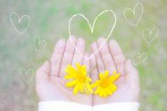 手のひらの上の黄色い花(愛情のイメージ)