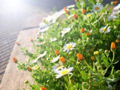 光の方に向けて花を咲かせる白い花