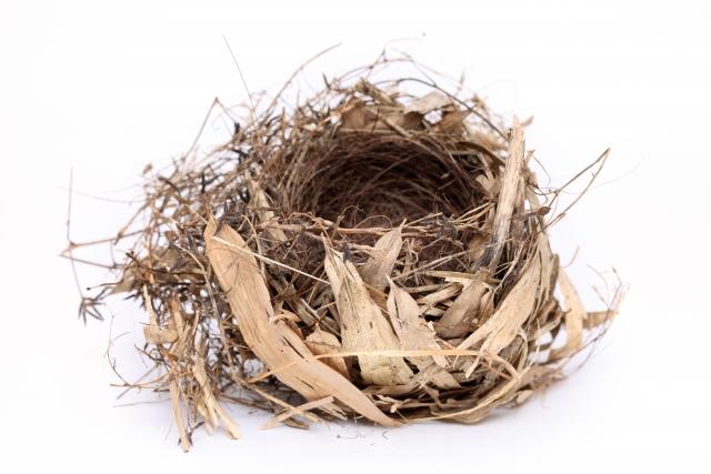 ひなが飛び立ち空になった巣