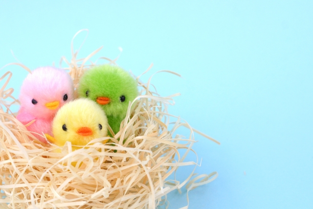 鳥の巣(親とひな鳥)