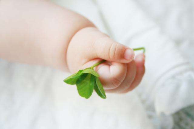 四葉のクローバーを握っている赤ちゃんの手